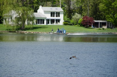Treatment fanboat surveys the lake while a Canadian Goose flies by. (Photo by Rob Cummings)