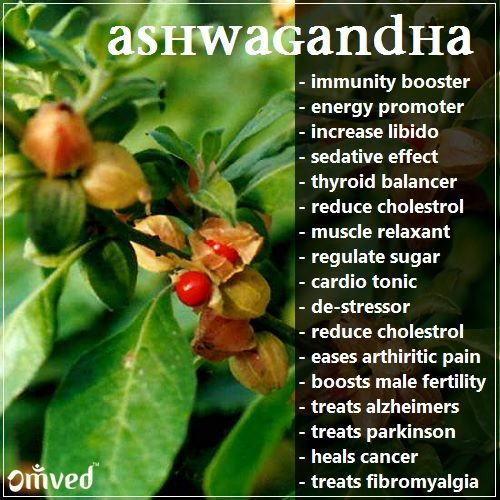 benefits of Ashwagandha adrenal fatigue supplements