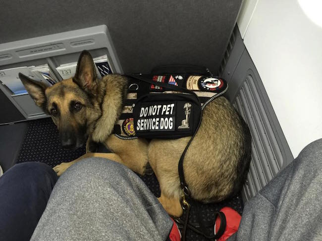 They cost from $ to $ and should be considered in computing the cost of flying a dog. Conclusion: Adding everything from the flight tickets to the travel requirements of the dog, the total cost could rack up from $ to $34, depending on the dog size, destination and other travel requirements.