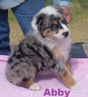 Abby 8 weeks