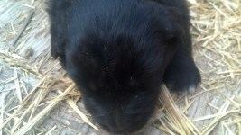 M2 Black Bear 4 weeks