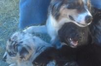 M2 BlackBear and F1 Bridget with Mom