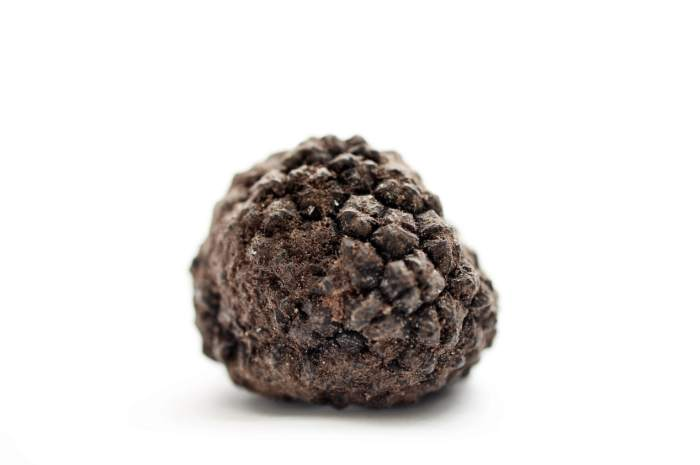 what-is-a-black-truffle?