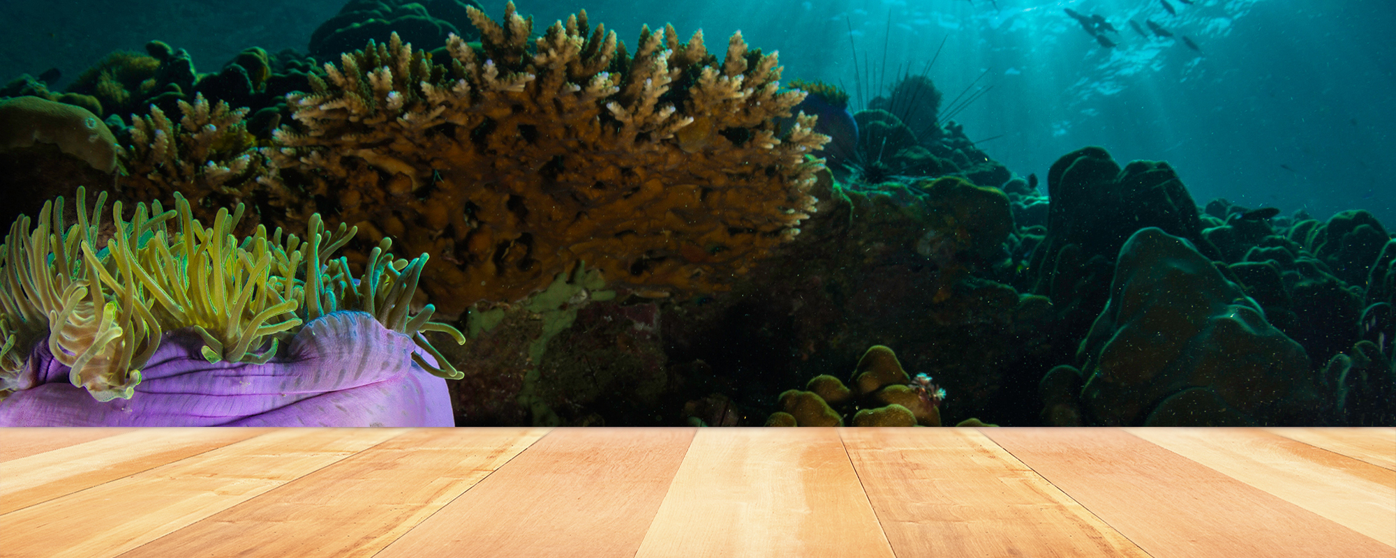 Prioritising investment in the Great Barrier Reef