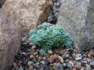 Why Hypertufa and Succulents? (3/4)