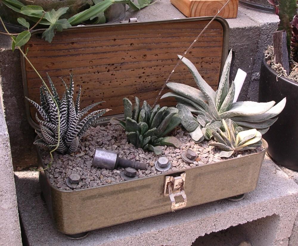 Austin delivers Succulent-astic! (1/6)