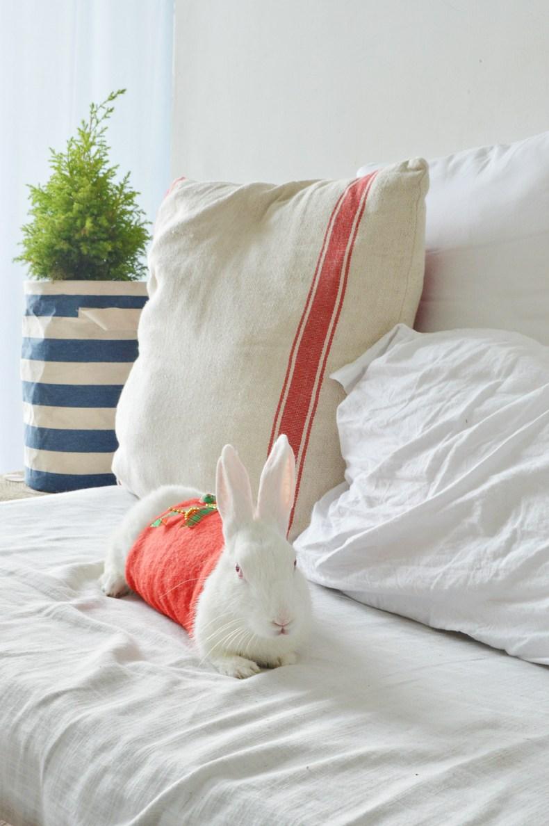 Trumatter Rabbit