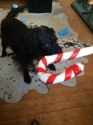 One happy hound