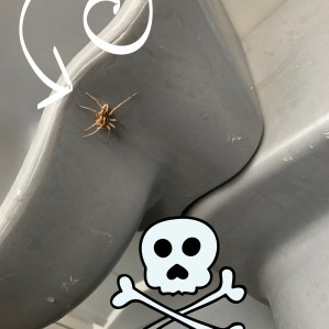 Spider had to die!