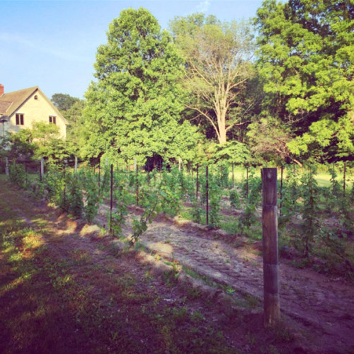 Trumeau Farm Vineyard_02