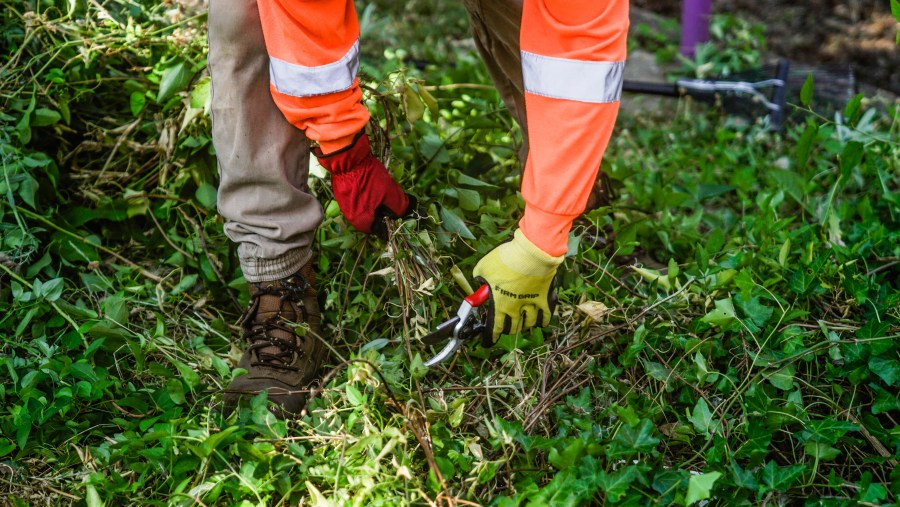 Commercial Facility Landscaping Services