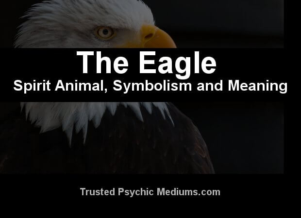 Meaning Of The Bald Eagle Symbol The Best Eagle 2018
