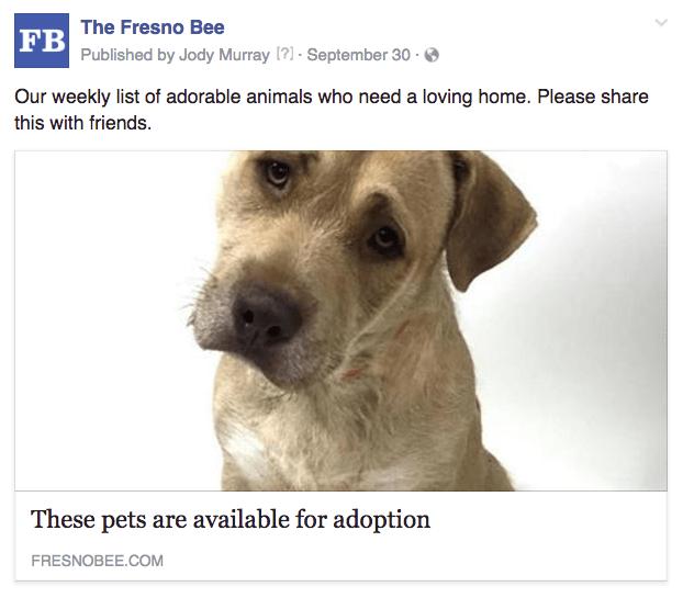 Fresno Pet Adoption Weekly Trusting News