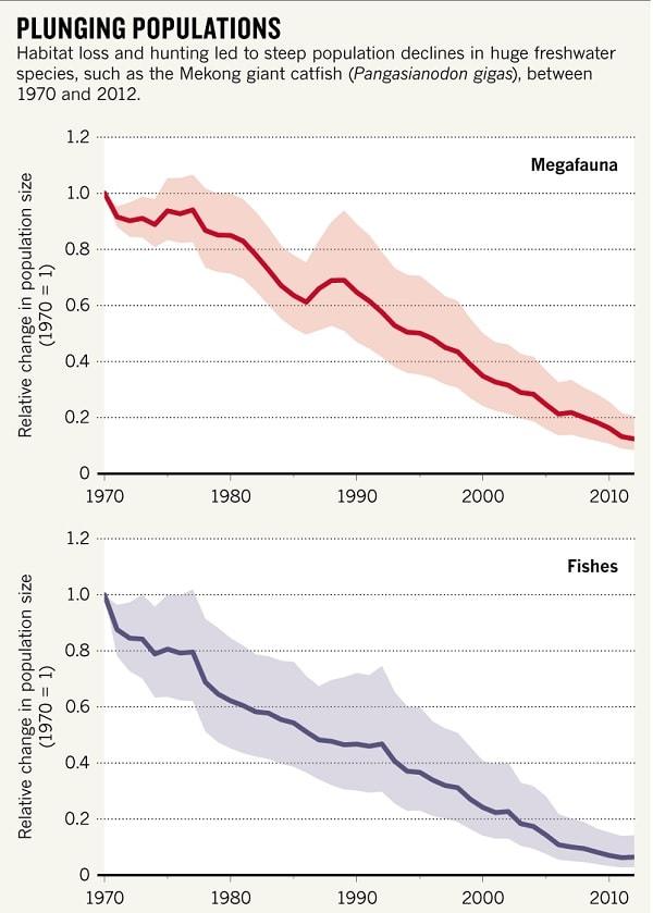 mégafaune graphique de la population