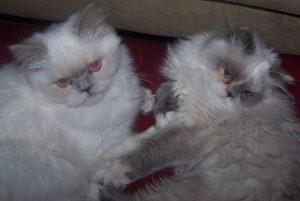 Princess & Muffin