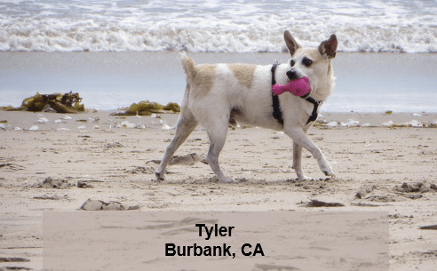 The Strange and Unusual of California Pet Food Law – Truth