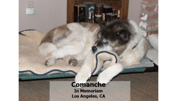 Copper Storage Disease Dog Food Concern – Truth about Pet Food