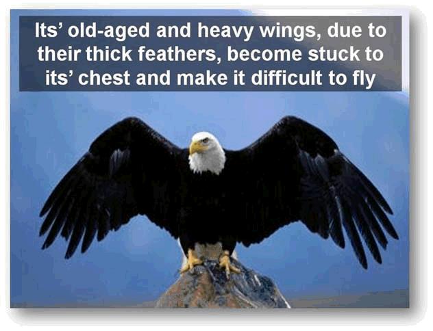 Transform Like an Eagle (5/6)