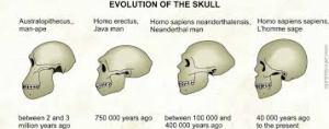 evolution of human skulls 2