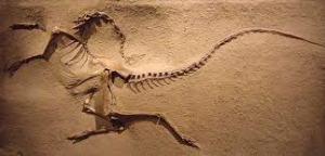 fossil death pose 1