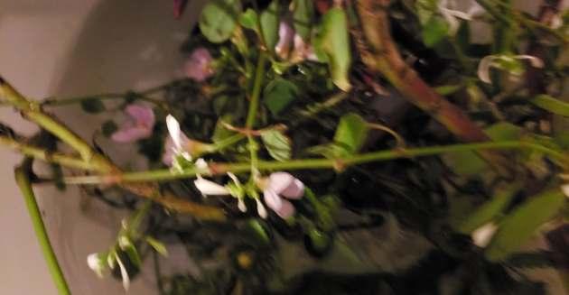flower bowl of replant for next flower season