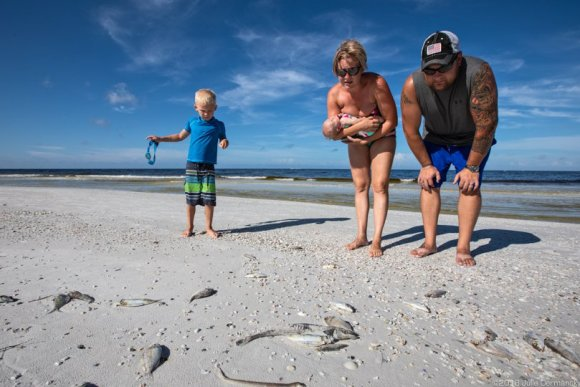 A couple with their children on Siesta Key Beach, the morning before their wedding. The Turtle Bay Resort where their wedding was being held, promised to clean the dead fish off the beach before the ceremony later that evening.