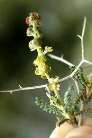 wild lote branch