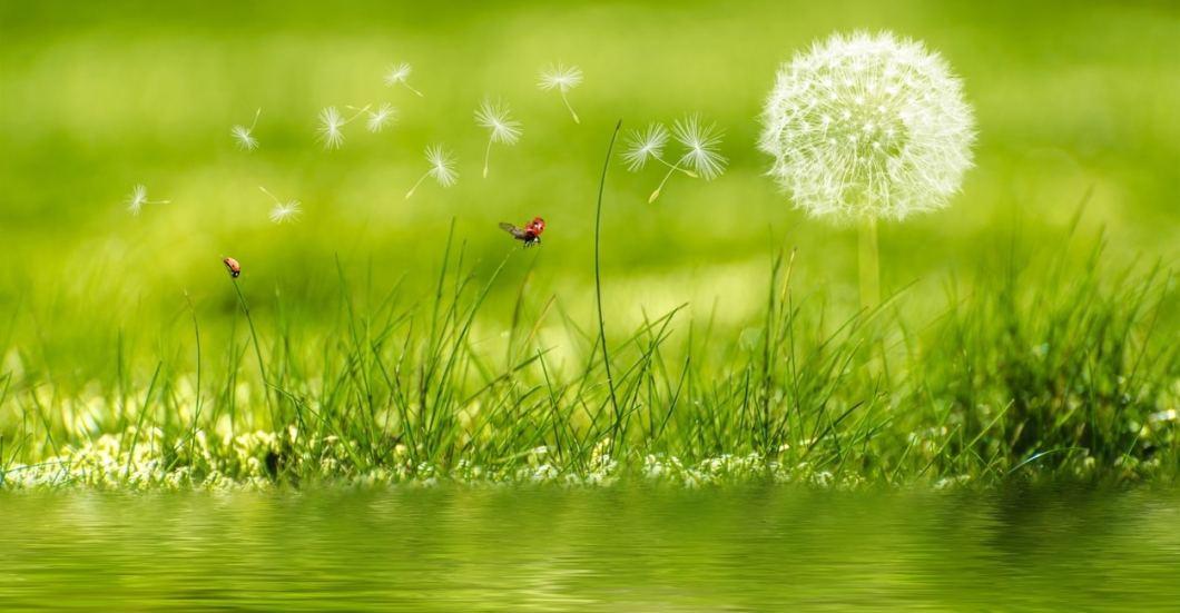 each petals as facets of life