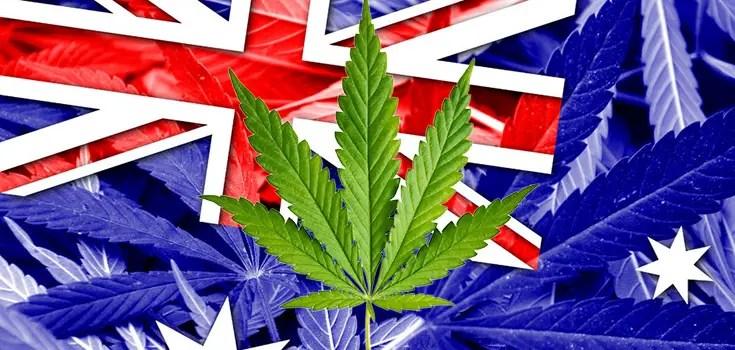 marijuana-australia-735-350-2