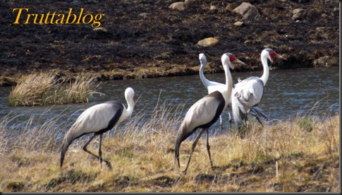 Cranes (1 of 7)