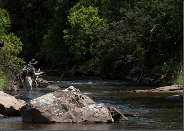 Umgeni River-13