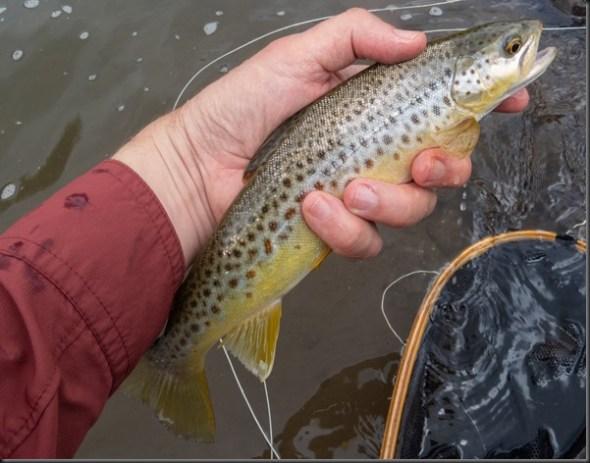 Bushmans River-14