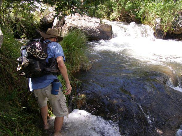 Poachers stream