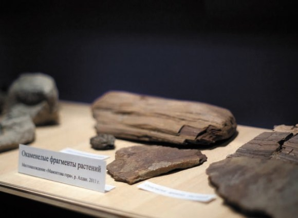 Окаменелые фрагменты растений — современников мамонта