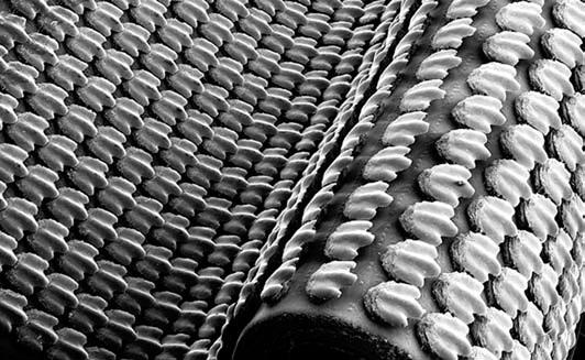 Искусственная кожа акулы. На ее вогнутом и плоском участках зубчики накладываются друг на друга, на выгнутом участке расстояние между ними увеличивается.