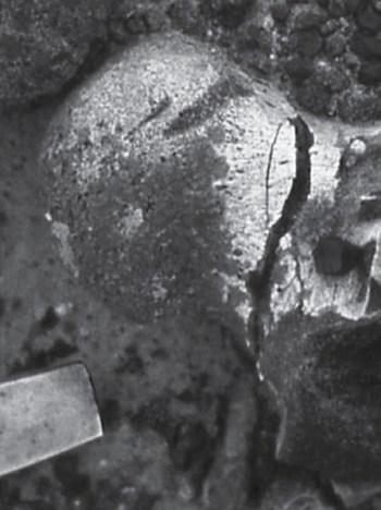 Игрушка тираннозавра — шейный мыщелок  цератопса со следами зубов хищника.  Он покусывал круглую косточку для  собственного развлечения (Rothschild, 2014)