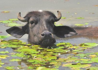 «Погружение в нирвану». Озеро Суринсар.  Фото А.В. Андреева