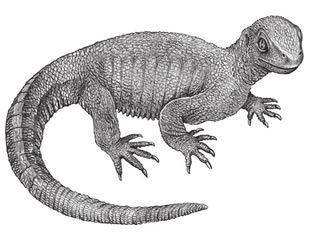 Рис. 6. Pappochelys rosinae — с зубами,  длинным хвостом и без панциря, но уже несомненная черепаха (www.nbcnews.com)