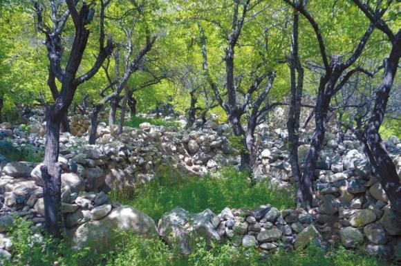 Сад среди камней