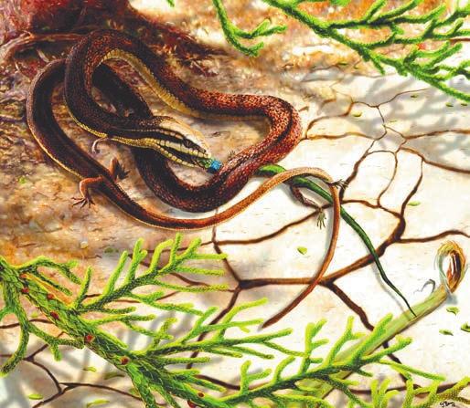 Рис. 2б. Художники по-разному представляют себе четвероногую змею. Реконструкция с саламандрой — www.sci-news.com