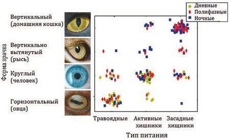 Рис. 1. Форма зрачков соответствует времени суточной активности и способу питания (Banks et al., 2015)