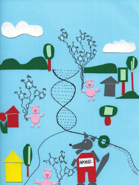 Сказка «Три поросенка» в контексте мутагенеза человека. Братья-поросята — это цитозины в контексте TpCpA (специфический контекст для мутаций, оставляемых APOBEC) во время репликации ДНК. Младший поросенок (ближайший к зрителю) — цитозин — построил соломенный домик на отстающей цепи ДНК и подвержен атакам волка-APOBECа. Средний поросенок — метилированный цитозин — построил деревянный домик и защищен лучше (метилирование ДНК несколько защищает от APOBEC). Наиболее безопасный, каменный домик — цитозин в двуцепочечной ДНК, которая пока не реплицируется, — принадлежит старшему брату