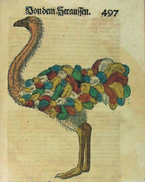 Иллюстрация к «Истории животных» Геснера. Гравюра на дереве, раскрашенная от руки (1600)