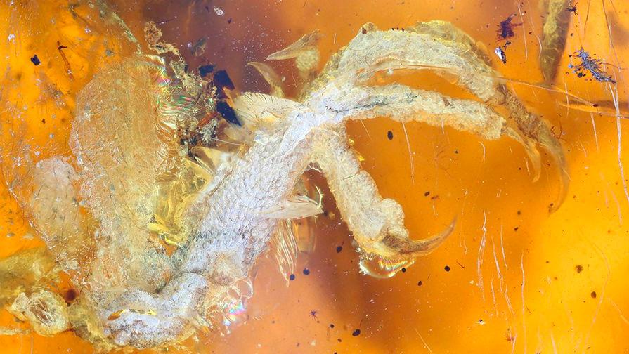 Птенец в янтаре. Xing Lida/sciencealert.com