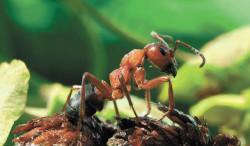 38_ants-1