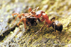 38_ants-4