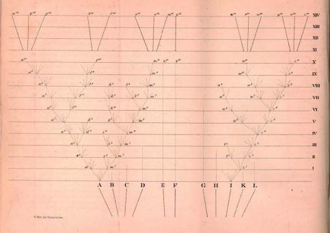 Диаграмма из «Происхождения видов», отражающая представления Дарвина о родственных отношениях между видами живых организмов. Прописные буквы обозначают предковые виды, строчные буквы – их вариететы и новые виды, возникающие на их основе. Римскими цифрами обозначены моменты времени, между которыми сменяется тысяча поколений. В пояснениях к этой схеме Дарвин обсуждает возможность выделения возникших в итоге видов в отдельные роды и подсемейства, подразумевая, что эти группы должны объединять всех потомков одного предкового вида. Впоследствии такие группы получили название монофилетических.