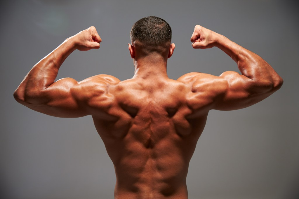Understanding the Anatomy of the Back