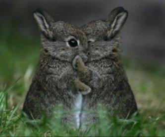 4 hugs a day