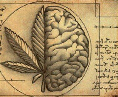 Cannabis curing cancer research - endocannabinoid system